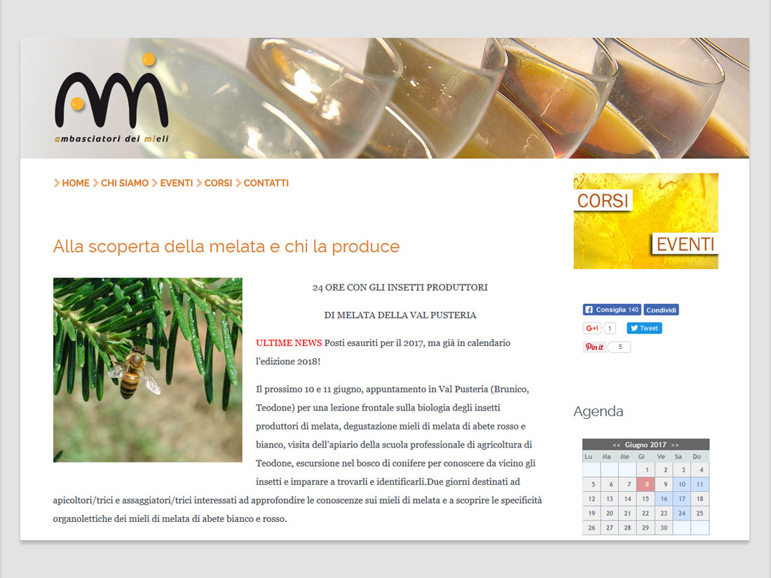 word+image - ami web site